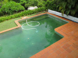 Swimming Pool Algae: What it is and How to Remove It