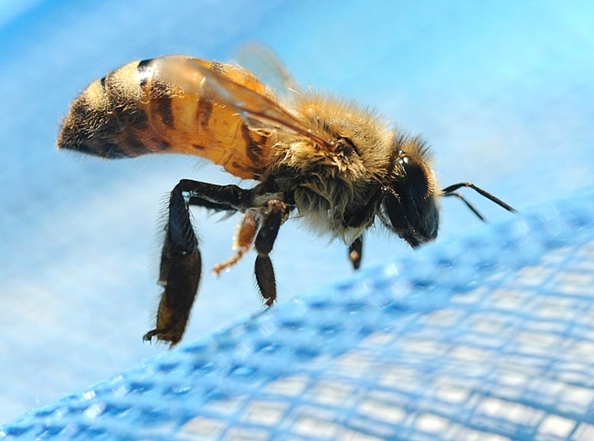 a close up of a bee